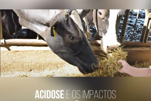 Acidose e os impactos na produção de leite