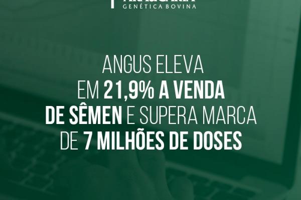 Angus eleva em 21,9% a venda de sêmen e supera marca de 7 milhões de doses