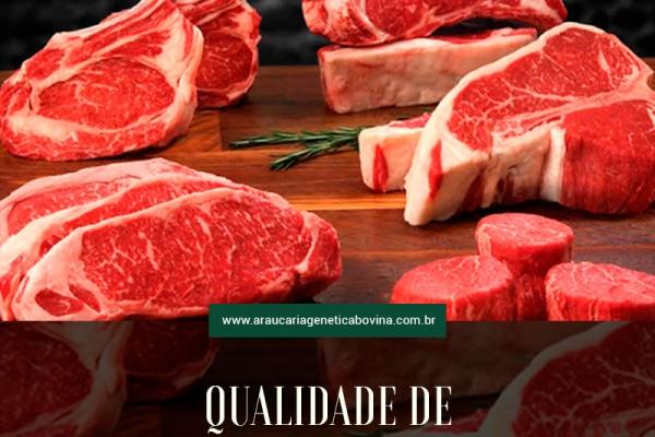 Qualidade de carne bovina